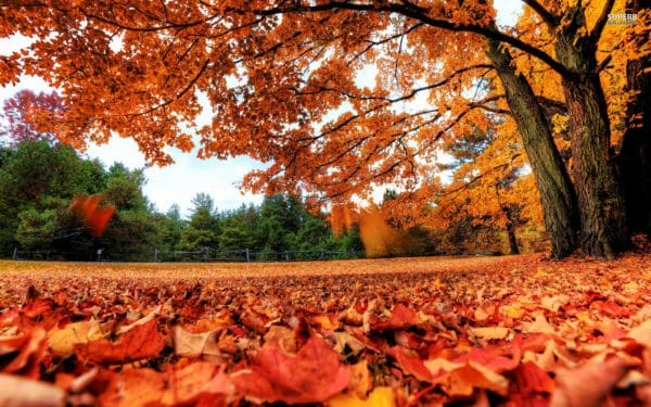 Fall in Love With These Fall Colors!